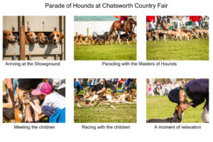 T_Bown_Story in 6 Pictures - Hounds